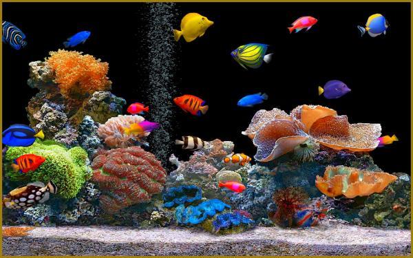 Aquarium pas cher 2